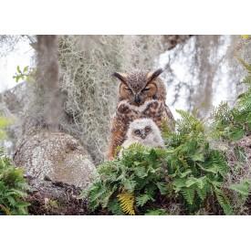 Puzzel 1000 stukjes Great Horned Owl